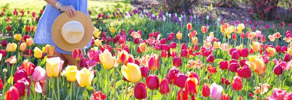Gartenkalender Blumenwiese