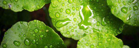 Gartenkalender Regen