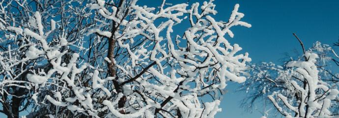 Winterfester Baum