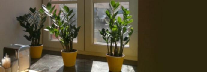 Winterfeste Pflanzen drinnen