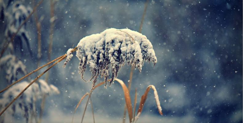 Farn Schneebedeckt