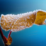 Frostschutz Pflanzen
