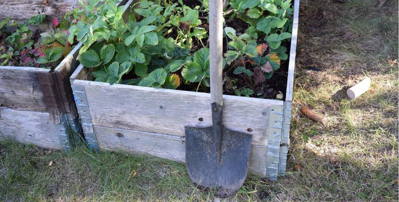 Gartenarbeit Beet