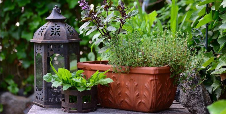 Gartenkräuter als Dekoration